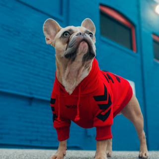 French Bulldog Health: 5 Things You Can Do To Improve Your Dog's Life