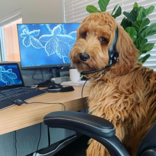 Dogs Working From Home Is The Instagram Account You Need