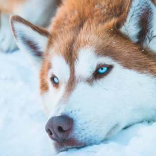 Husky Health: 5 Things You Can Do To Improve Your Dog's Life