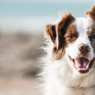 5 Foods That Will Improve Your Dog's Coat