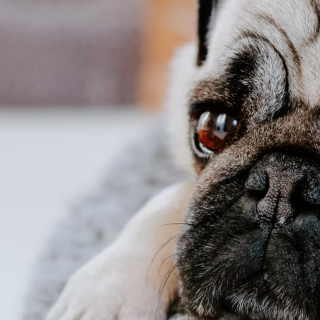 5 Foods That Will Improve Your Dog's Eyesight