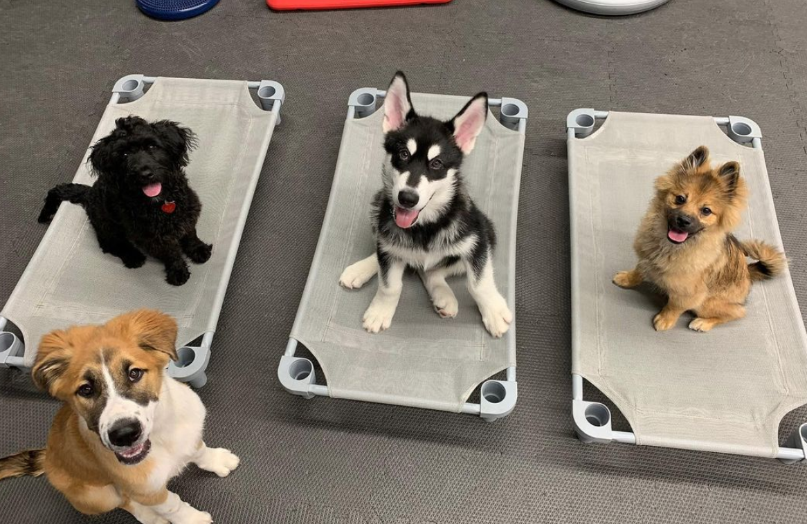 Doggy Day Care Maryland