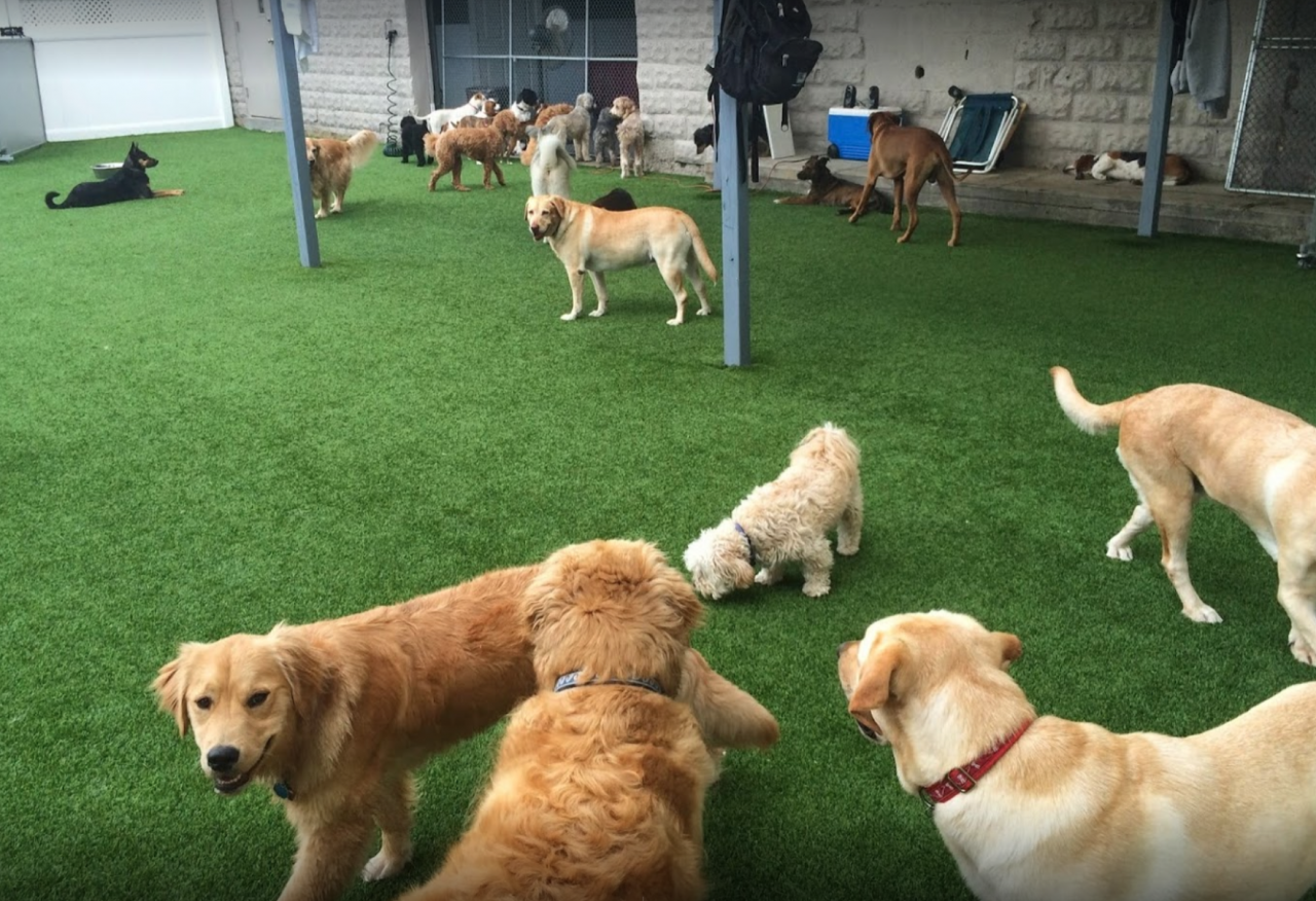 Doggy Day Care Connecticut