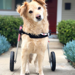 Dog Of The Day #3 – Super Scooty