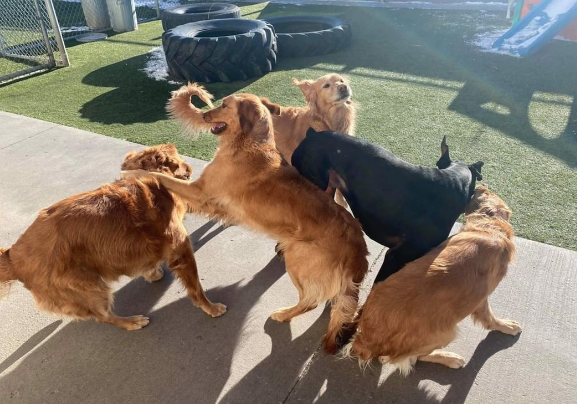 Doggy Day Care Wyoming