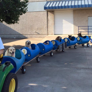 Man Builds Homemade Train For Dogs And Takes Them On Adventures