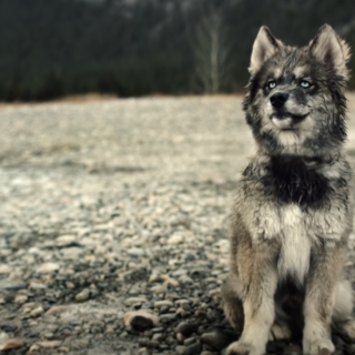 5 Amazing Movies For Dog Lovers