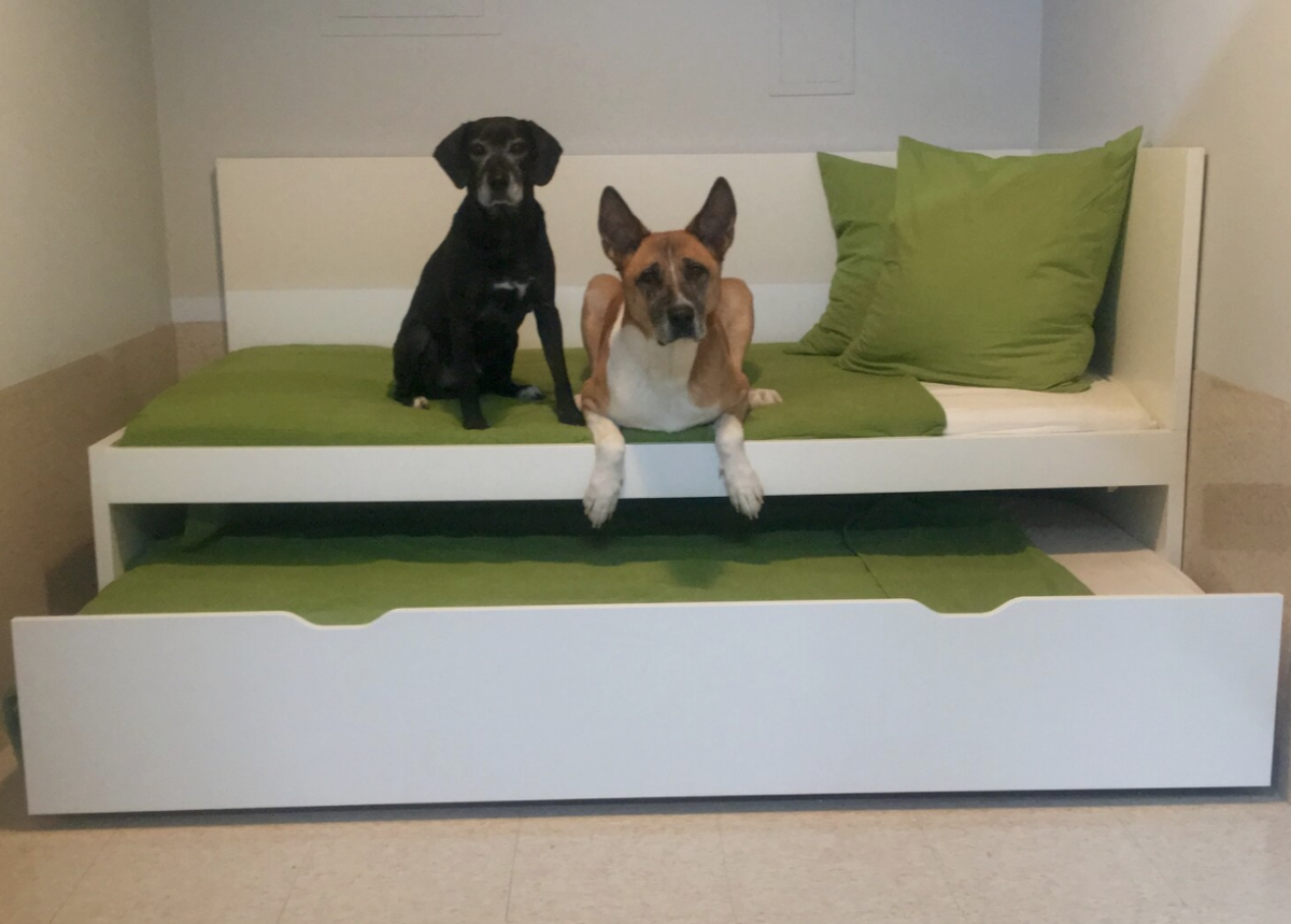 Doggy Day Care