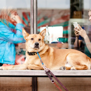 The 50 Best Dog Friendly Coffee Shops In America