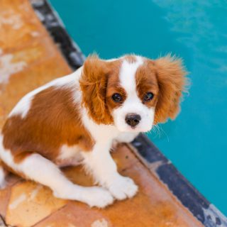 Puppy Hiccups: Everything You Need To Know