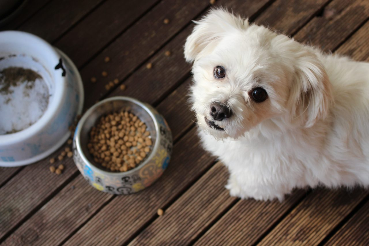 What vegetables can dogs eat? The Ultimate Guide