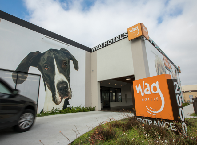 Business #16 – Wag Hotels