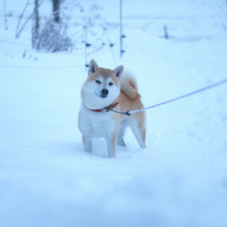 The 50 Best Japanese Dog Names