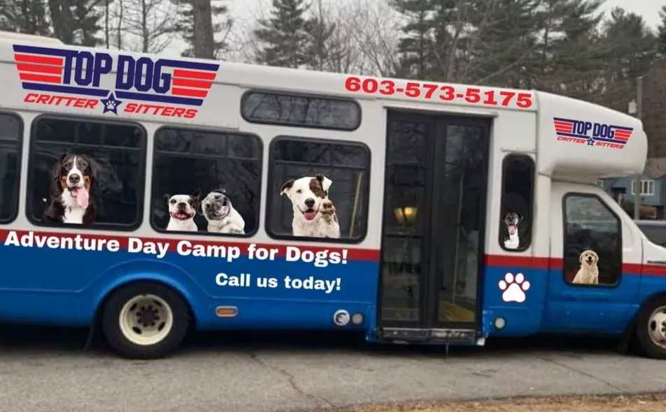 Dog Sitters In New Hampshire