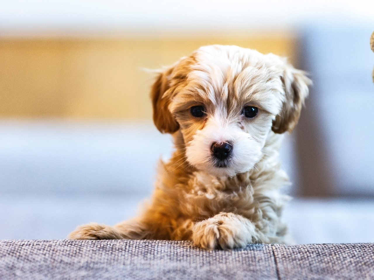 Dog Sitters In New Jersey