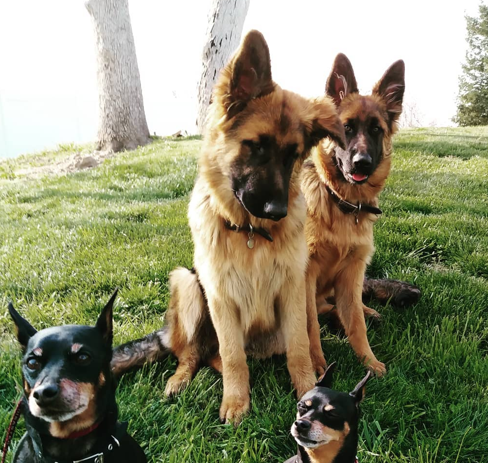 Dog Trainers In California