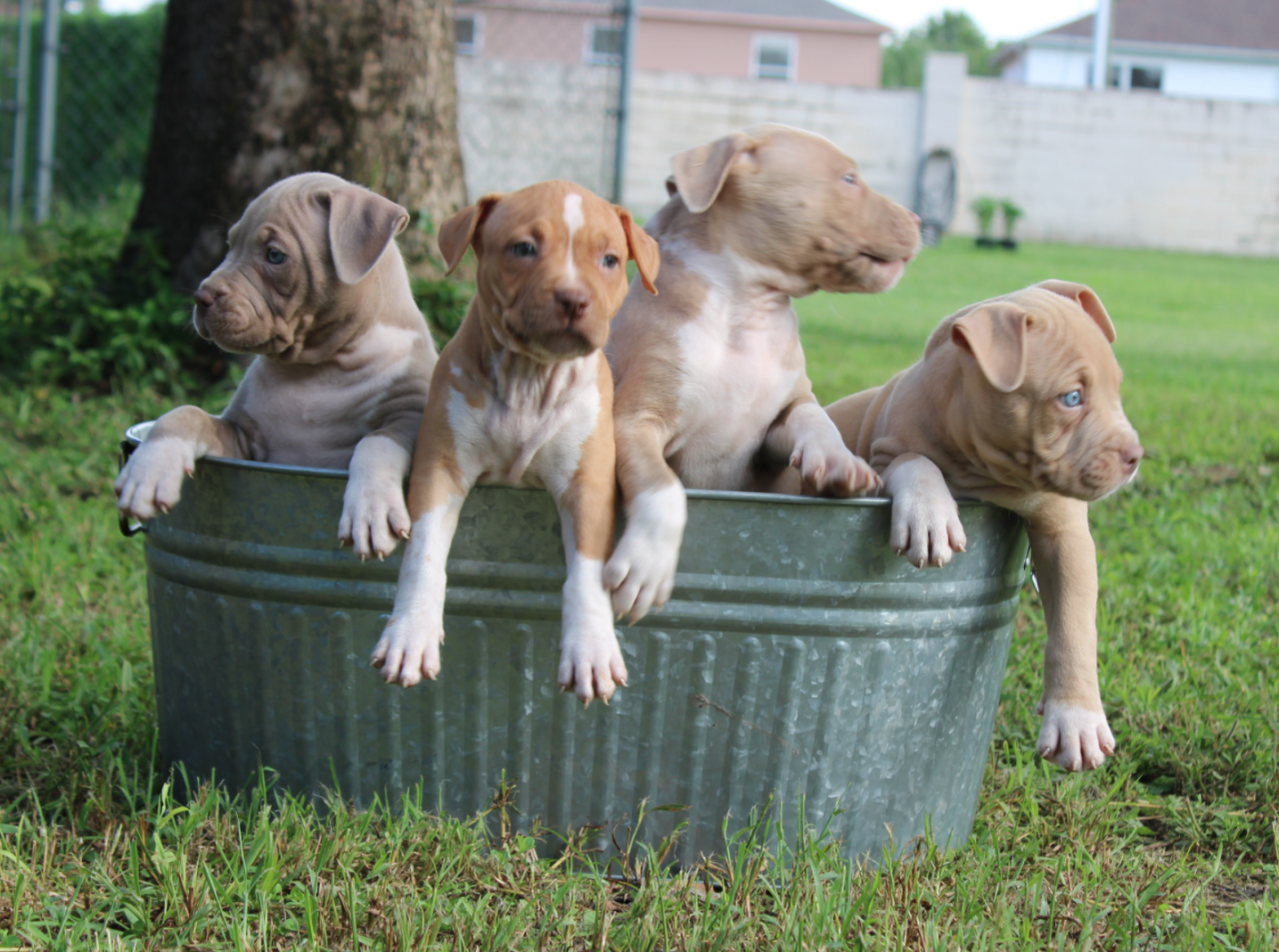 Dog Breeders In Florida puppies